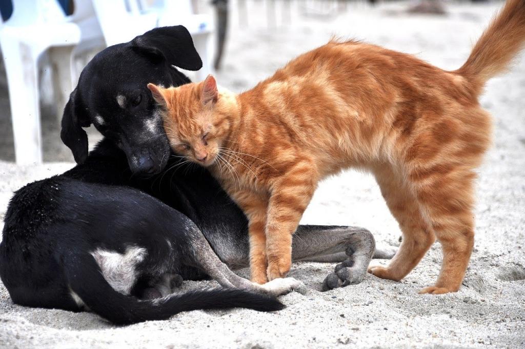 ΔΗΜΟΣ ΞΗΡΟΜΕΡΟΥ:Πρόσκληση - γνωστοποίηση για προμήθεια ταϊστρών, ποτιστών και ζωοτροφών για τα αδέσποτα ζώα.